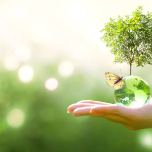 Ecolabel Professionale